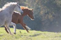 Праздник встречи лошадей в Штирии