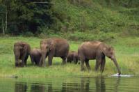 ЮАР: парки и заповедники можно посещать бесплатно в рамках акции