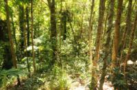 Брюссель: голые прогулки по лесам и паркам