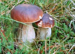 Испания: грибные экскурсии